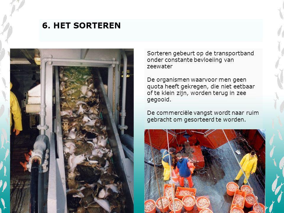 V L I Z Sorteren gebeurt op de transportband onder constante bevloeiing van zeewater De organismen waarvoor men geen quota heeft gekregen, die niet ee