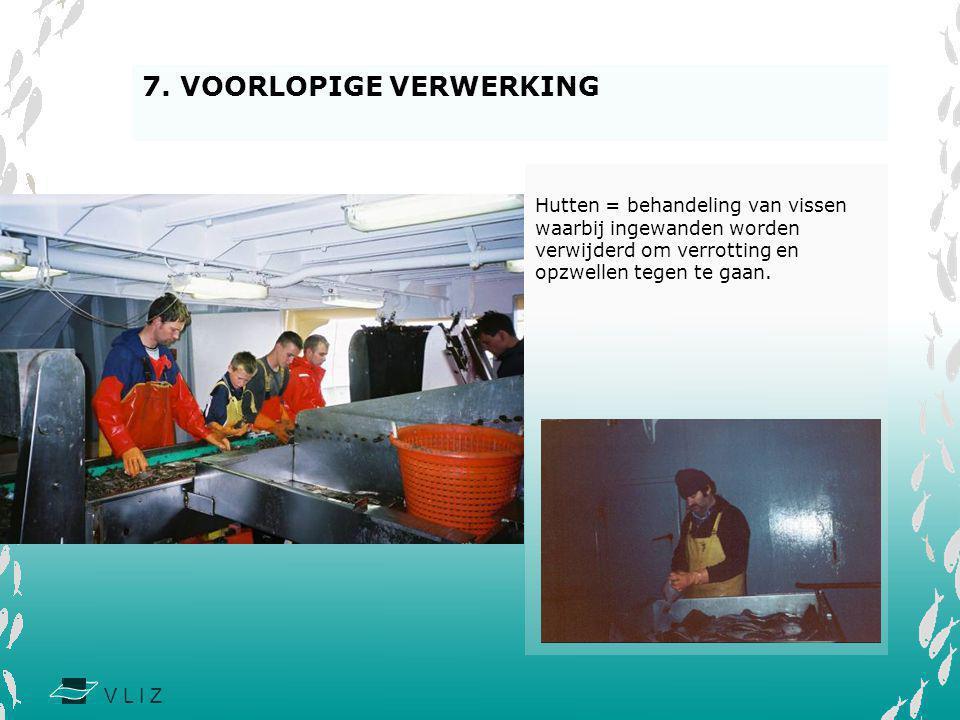 V L I Z Hutten = behandeling van vissen waarbij ingewanden worden verwijderd om verrotting en opzwellen tegen te gaan. 7. VOORLOPIGE VERWERKING