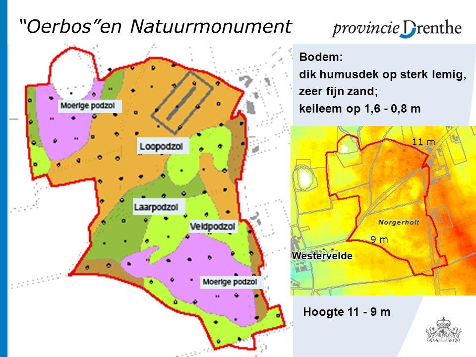 Oerbos en Natuurmonument Bodem: dik humusdek op sterk lemig, zeer fijn zand; keileem op 1,6 - 0,8 m 11 m 9 m Hoogte 11 - 9 m