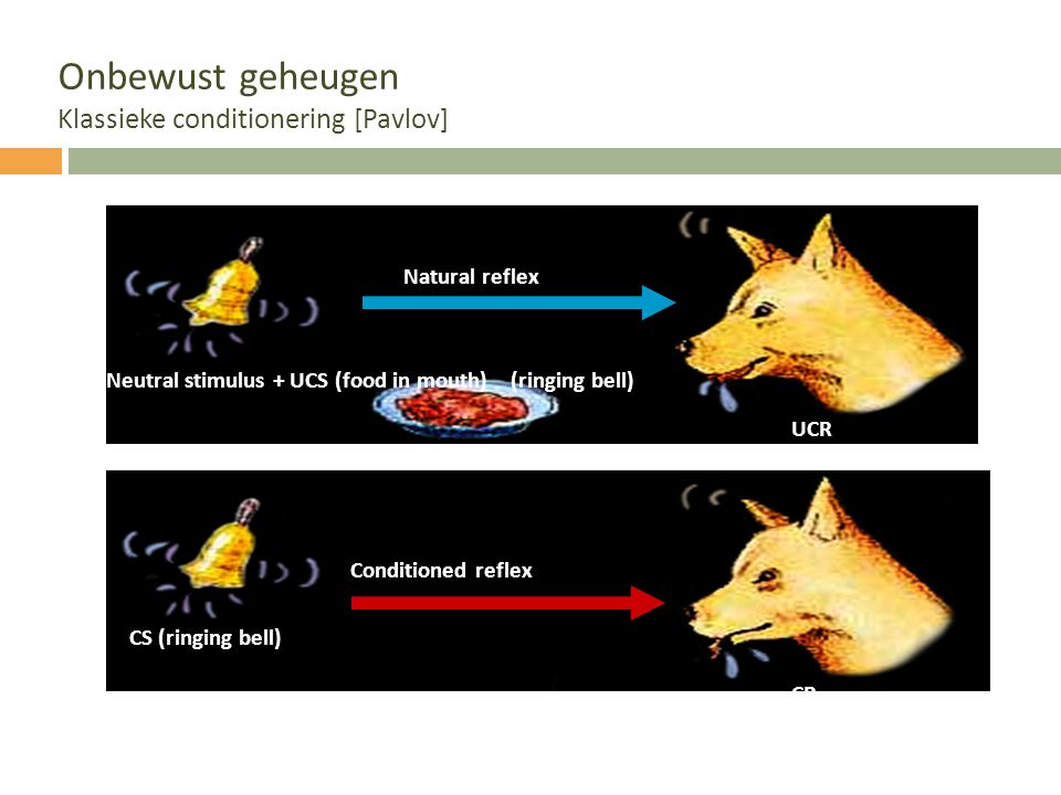 Onbewust geheugen Klassieke conditionering [Pavlov] Natural reflex Conditioned reflex CR (salivation) UCR (salivation) CS (ringing bell) Neutral stimu