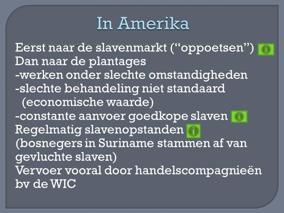 """Eerst naar de slavenmarkt (""""oppoetsen"""") Dan naar de plantages -werken onder slechte omstandigheden -slechte behandeling niet standaard (economische wa"""