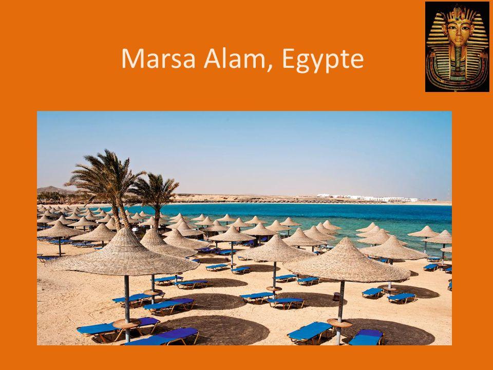 En nu nog enkel aftellen… http://www.timeanddate.com/countdown/vacation?iso=20130807T00&p0=53&msg=Egypte%2C+Marsa+Alam Groetjes vanuit Marsa Alam!