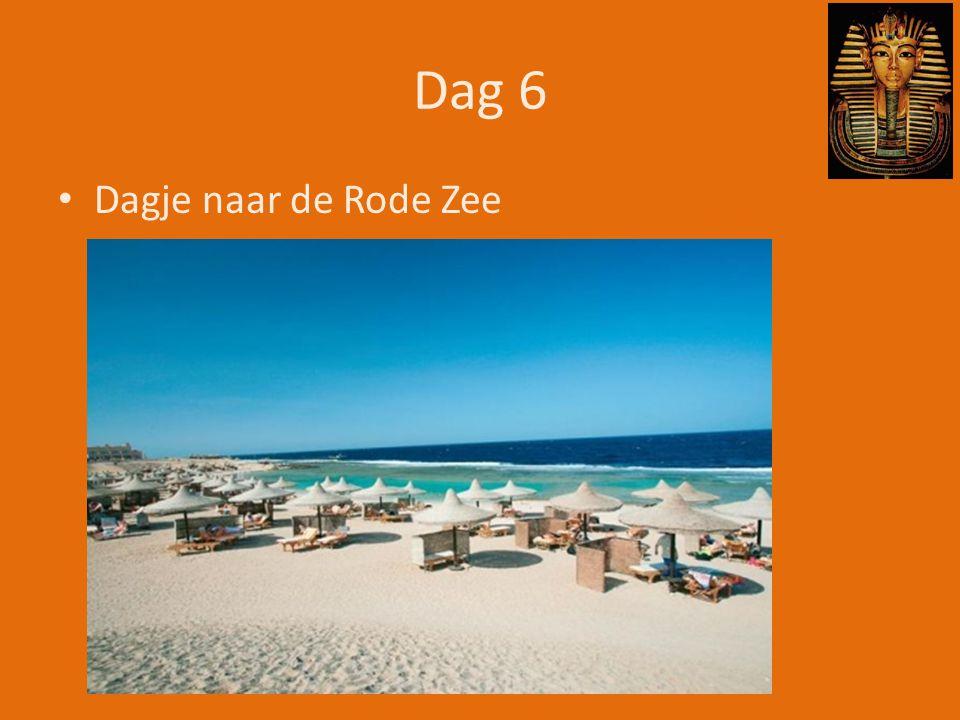 Dag 6 • Dagje naar de Rode Zee