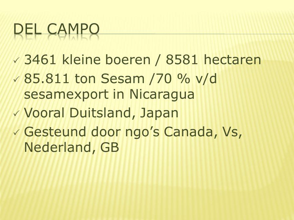  3461 kleine boeren / 8581 hectaren  85.811 ton Sesam /70 % v/d sesamexport in Nicaragua  Vooral Duitsland, Japan  Gesteund door ngo's Canada, Vs, Nederland, GB
