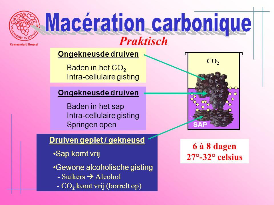CO 2 SAP Druiven geplet / gekneusd •Sap komt vrij •Gewone alcoholische gisting - Suikers  Alcohol - CO 2 komt vrij (borrelt op) Ongekneusde druiven B