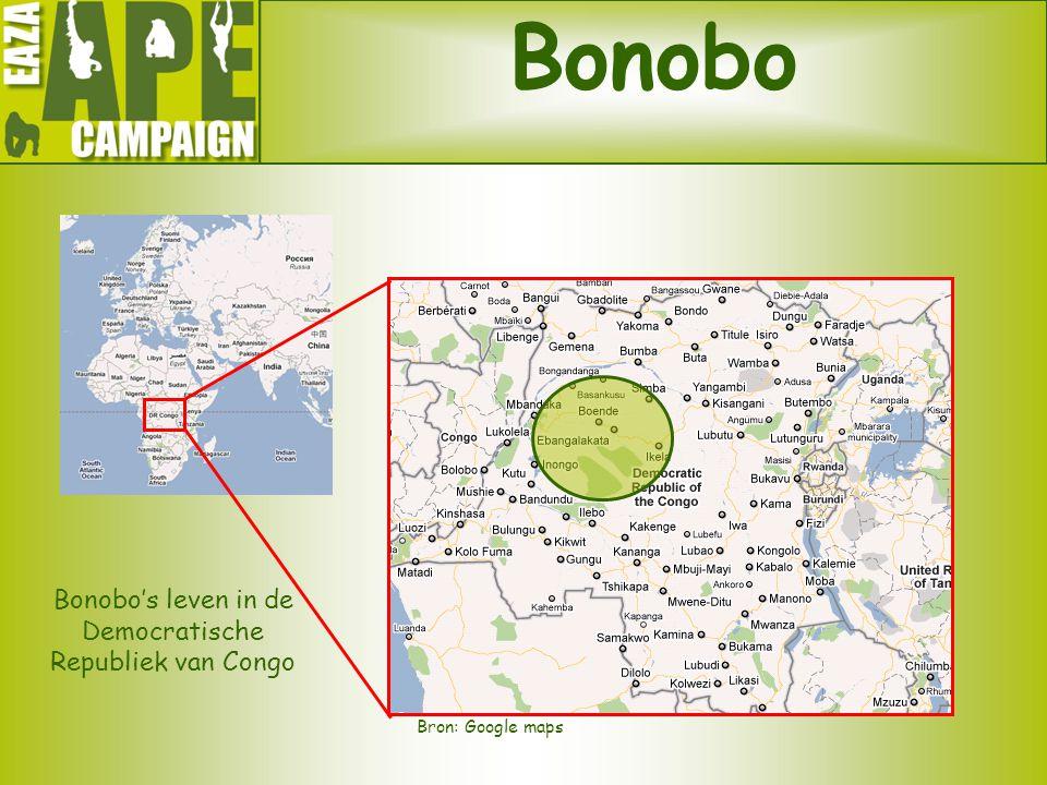 Bonobo Bonobo's leven in de Democratische Republiek van Congo Bron: Google maps