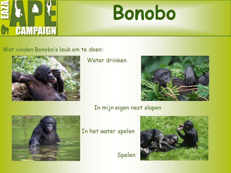Bonobo Wat vinden Bonobo's leuk om te doen: Water drinken In het water spelen Spelen In mijn eigen nest slapen
