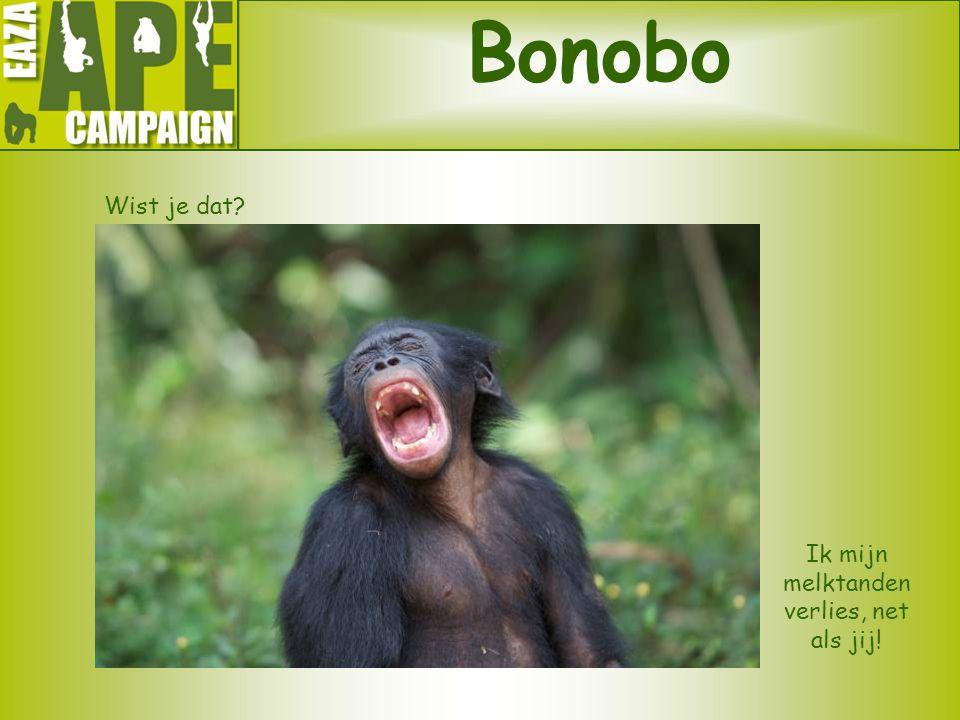 Bonobo Wist je dat? Ik mijn melktanden verlies, net als jij!