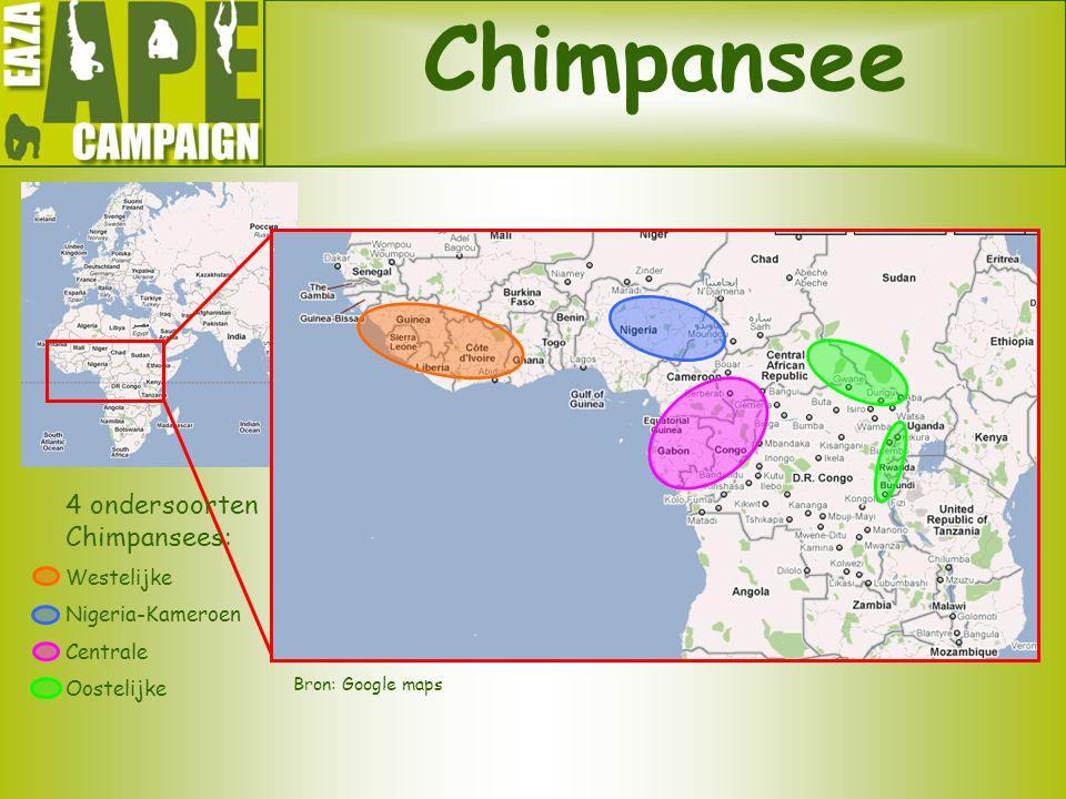 Chimpansee Bron: Google maps 4 ondersoorten Chimpansees: Westelijke Nigeria-Kameroen Centrale Oostelijke