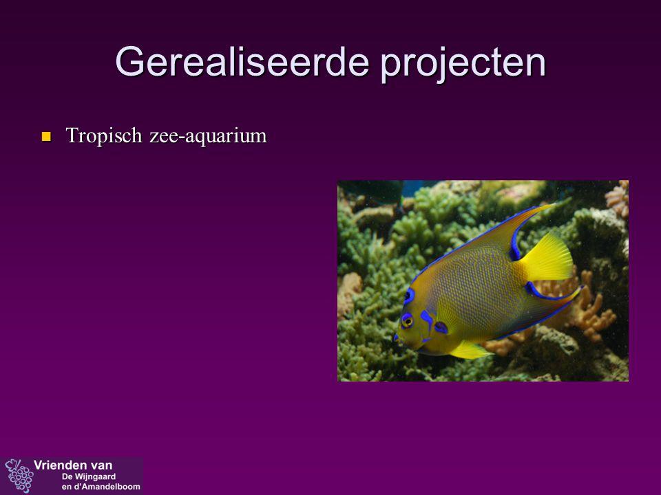  Tropisch zee-aquarium