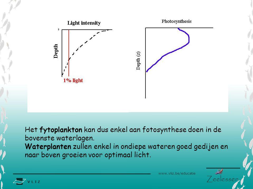 V L I Z www.vliz.be/educatie Zeelessen Het fytoplankton kan dus enkel aan fotosynthese doen in de bovenste waterlagen. Waterplanten zullen enkel in on