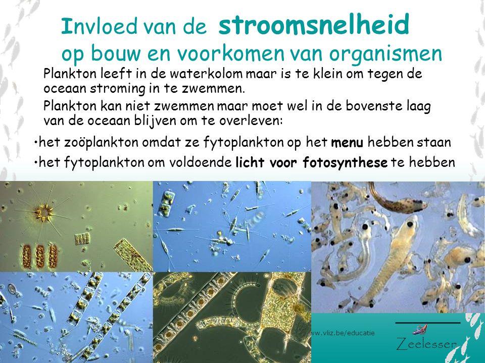 V L I Z www.vliz.be/educatie Zeelessen Invloed van de stroomsnelheid op bouw en voorkomen van organismen •het fytoplankton om voldoende licht voor fot