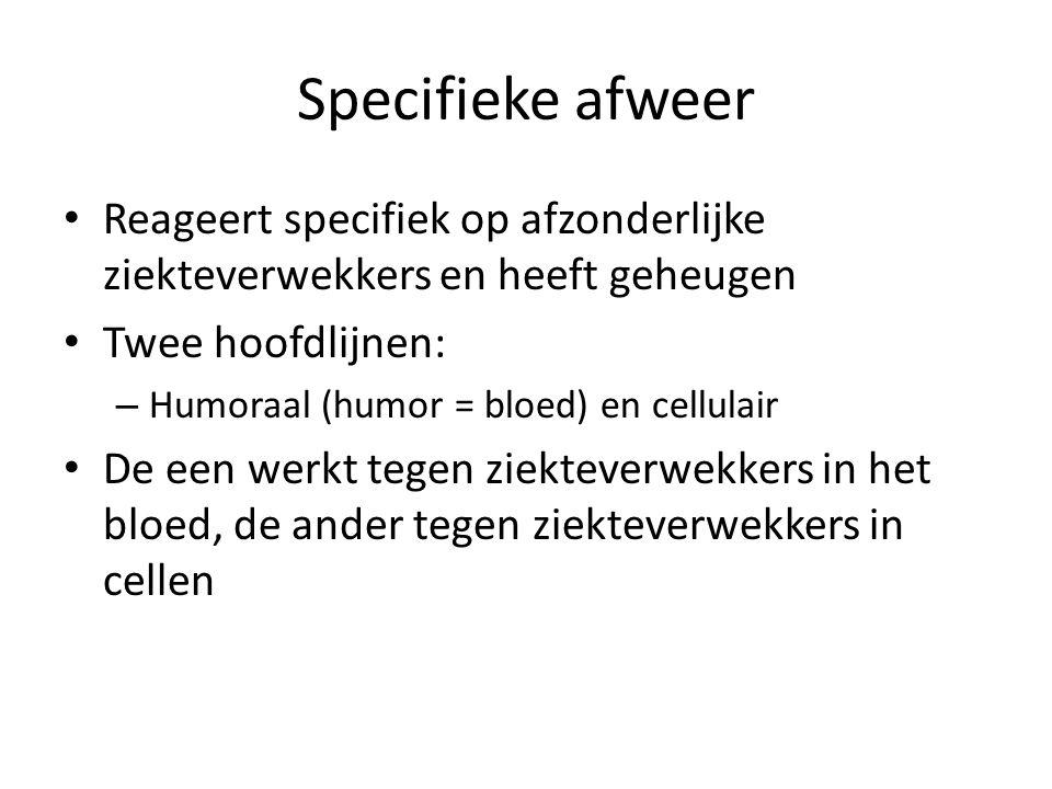 Specifieke afweer • Reageert specifiek op afzonderlijke ziekteverwekkers en heeft geheugen • Twee hoofdlijnen: – Humoraal (humor = bloed) en cellulair