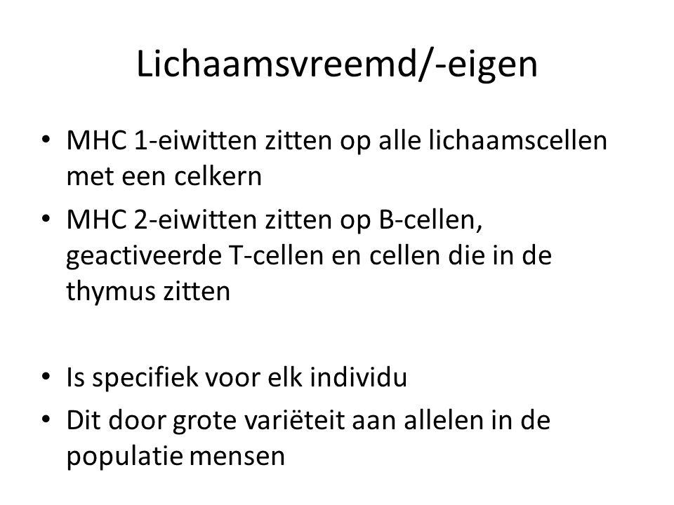 Lichaamsvreemd/-eigen • MHC 1-eiwitten zitten op alle lichaamscellen met een celkern • MHC 2-eiwitten zitten op B-cellen, geactiveerde T-cellen en cel