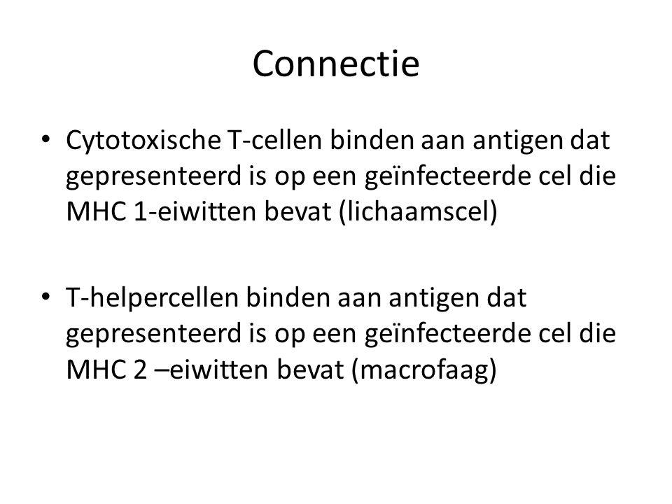 Connectie • Cytotoxische T-cellen binden aan antigen dat gepresenteerd is op een geïnfecteerde cel die MHC 1-eiwitten bevat (lichaamscel) • T-helperce