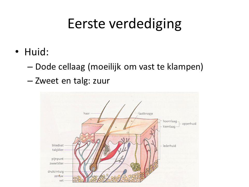 Eerste verdediging • Huid: – Dode cellaag (moeilijk om vast te klampen) – Zweet en talg: zuur