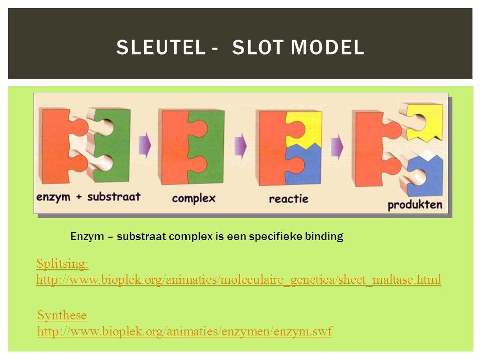 SLEUTEL - SLOT MODEL Enzym – substraat complex is een specifieke binding Splitsing: http://www.bioplek.org/animaties/moleculaire_genetica/sheet_maltas