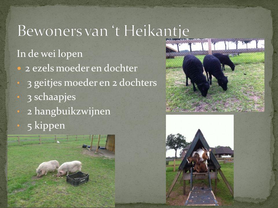 In de wei lopen  2 ezels moeder en dochter • 3 geitjes moeder en 2 dochters • 3 schaapjes • 2 hangbuikzwijnen • 5 kippen