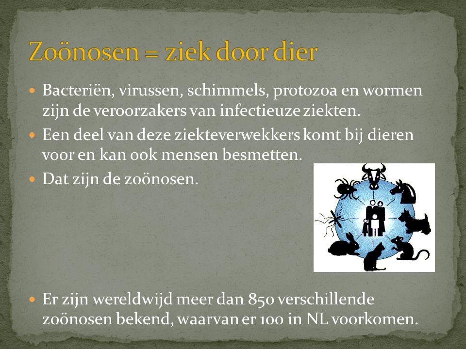  Bacteriën, virussen, schimmels, protozoa en wormen zijn de veroorzakers van infectieuze ziekten.  Een deel van deze ziekteverwekkers komt bij diere