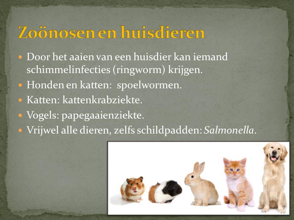  Door het aaien van een huisdier kan iemand schimmelinfecties (ringworm) krijgen.  Honden en katten: spoelwormen.  Katten: kattenkrabziekte.  Voge