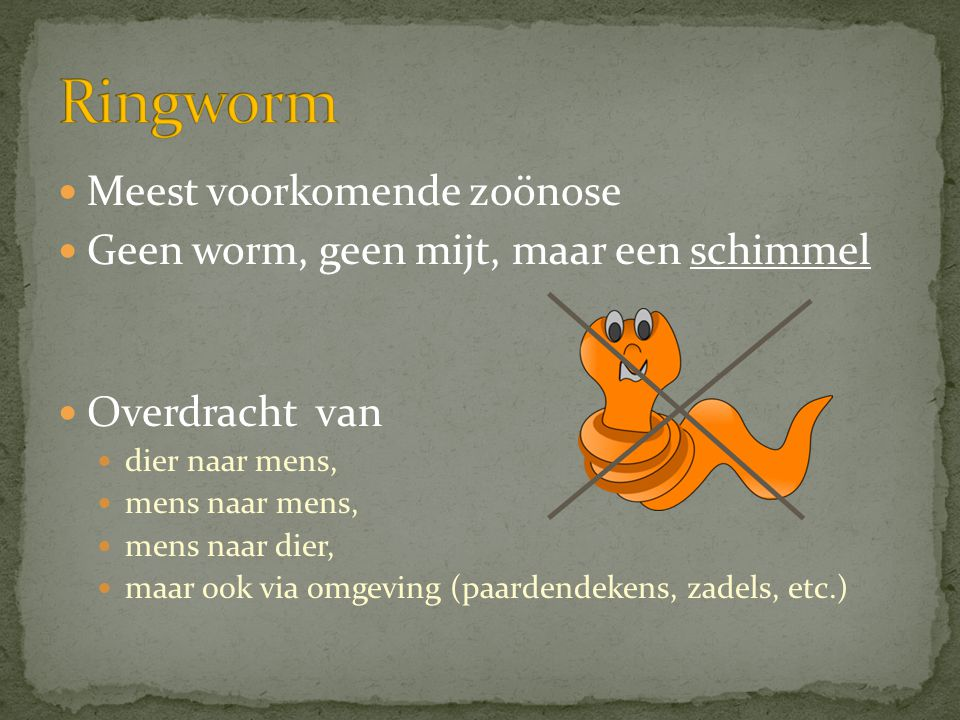  Meest voorkomende zoönose  Geen worm, geen mijt, maar een schimmel  Overdracht van  dier naar mens,  mens naar mens,  mens naar dier,  maar oo