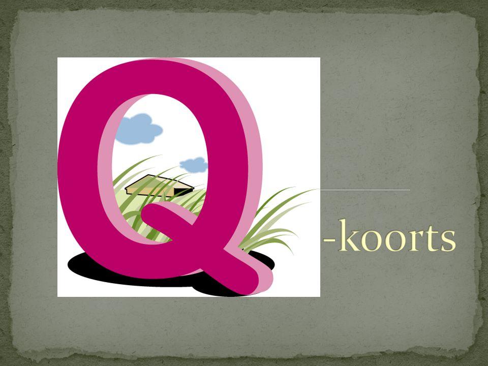 Ziekte voor het eerst vastgesteld bij slachthuispersoneel in Queensland, Australië  Q = query = vraagteken  De bacterie die Q-koorts veroorzaakt was namelijk jarenlang onbekend