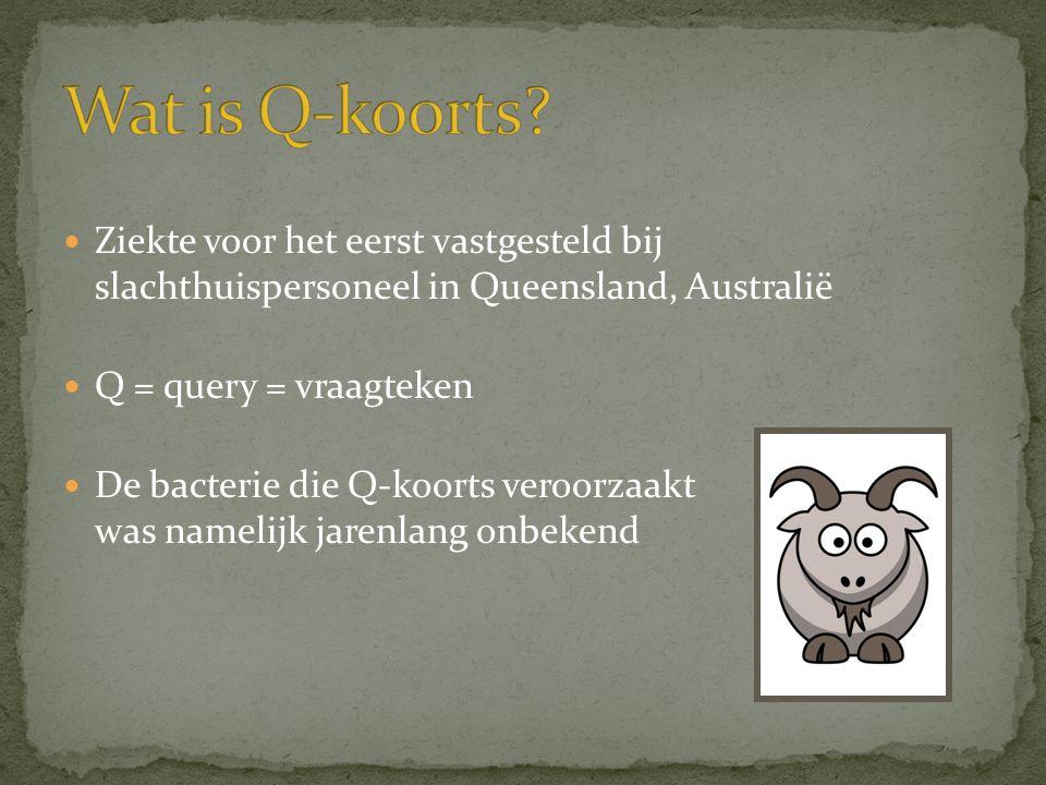  Ziekte voor het eerst vastgesteld bij slachthuispersoneel in Queensland, Australië  Q = query = vraagteken  De bacterie die Q-koorts veroorzaakt w