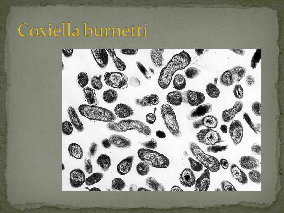 • Dier  dier: – Teken – Verblijf in besmette omgeving (mest, stro, etc) • Dier  mens (zoönose): – Inademing van met bacterie besmette stof – Eten van rauwmelkse geitenkaasproducten > gering risico • Mens  mens: – Niet – Mogelijk via placenta / vruchtwater