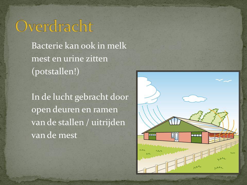 Bacterie kan ook in melk mest en urine zitten (potstallen!) In de lucht gebracht door open deuren en ramen van de stallen / uitrijden van de mest