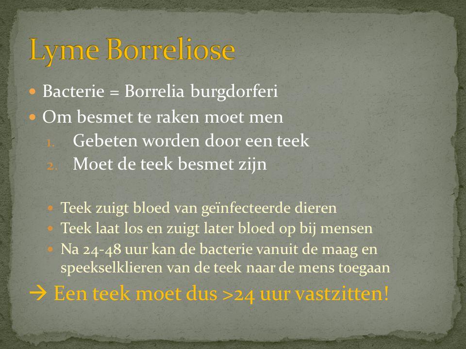  Bacterie = Borrelia burgdorferi  Om besmet te raken moet men 1. Gebeten worden door een teek 2. Moet de teek besmet zijn  Teek zuigt bloed van geï