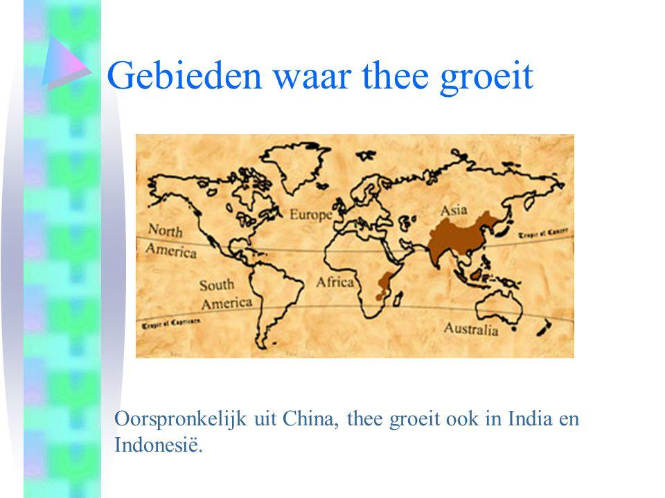 Gebieden waar thee groeit Oorspronkelijk uit China, thee groeit ook in India en Indonesië.