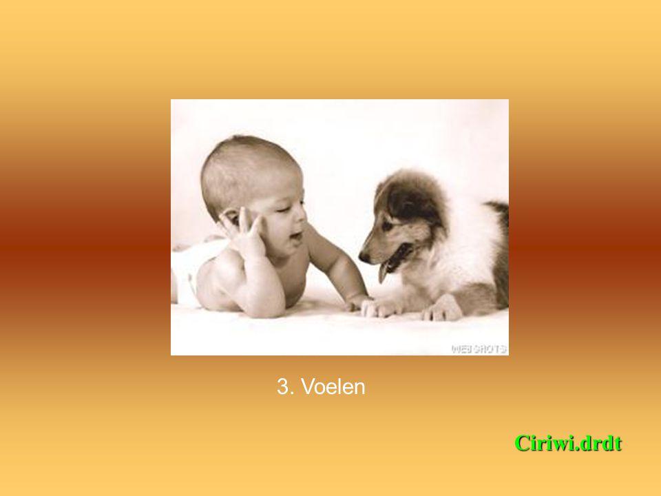 2. Horen Ciriwi.drdt