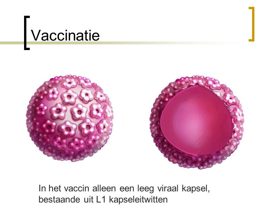 In het vaccin alleen een leeg viraal kapsel, bestaande uit L1 kapseleitwitten