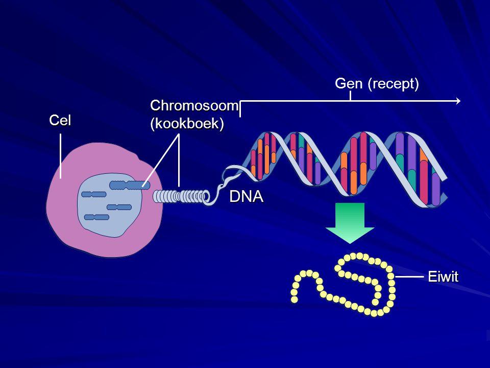 Cel Chromosoom(kookboek) Gen (recept) Eiwit DNA
