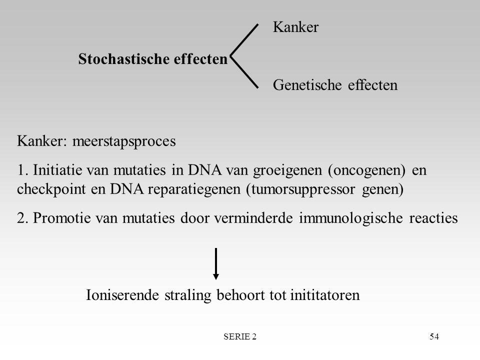 SERIE 254 Stochastische effecten Kanker Genetische effecten Kanker: meerstapsproces 1. Initiatie van mutaties in DNA van groeigenen (oncogenen) en che