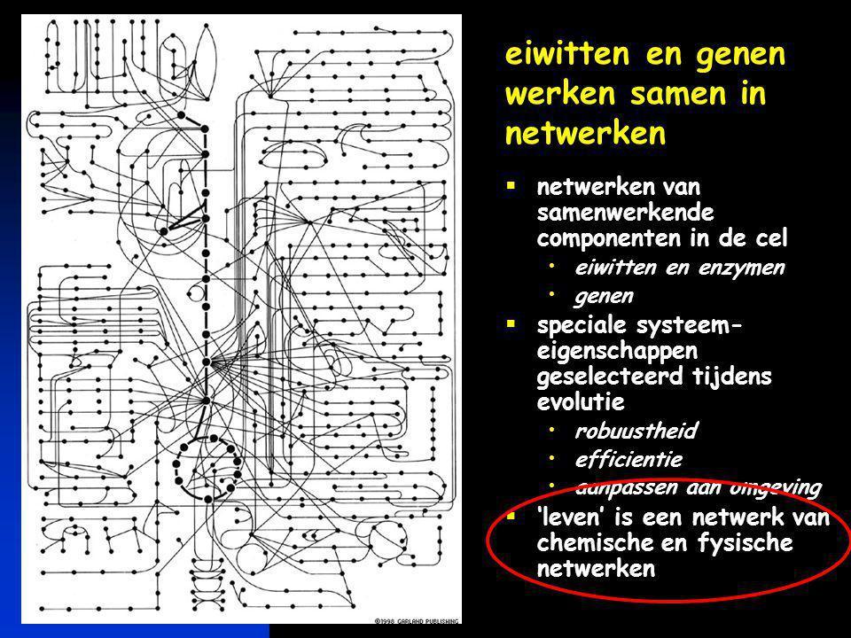 keerpunten 5-04 #11 eiwitten en genen werken samen in netwerken  netwerken van samenwerkende componenten in de cel •eiwitten en enzymen •genen  spec