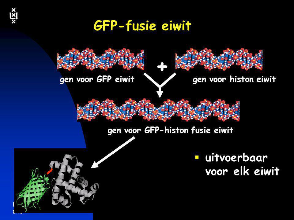 keerpunten 5-04 #16 GFP-fusie eiwit  uitvoerbaar voor elk eiwit gen voor GFP eiwitgen voor histon eiwit gen voor GFP-histon fusie eiwit +