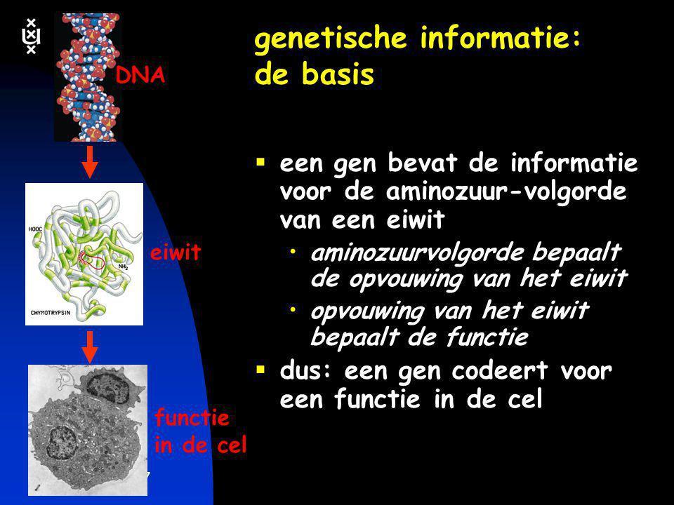 keerpunten 5-04 #7 genetische informatie: de basis  een gen bevat de informatie voor de aminozuur-volgorde van een eiwit •aminozuurvolgorde bepaalt d