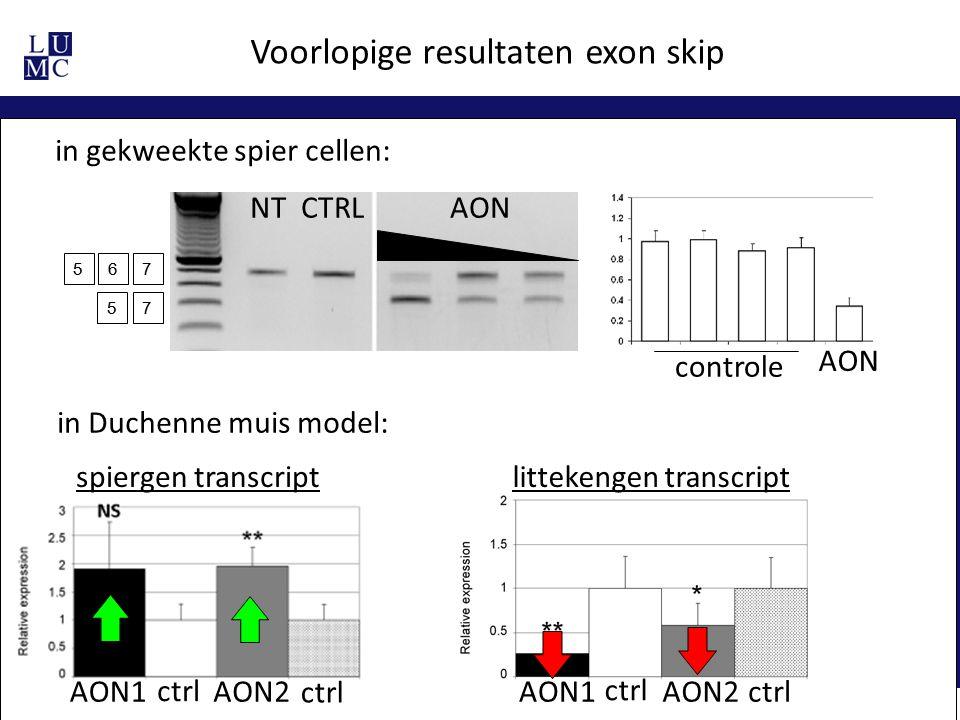 567 57 NT CTRL AON Voorlopige resultaten exon skip AON controle in gekweekte spier cellen: in Duchenne muis model: AON1AON2 spiergen transcript AON1AO