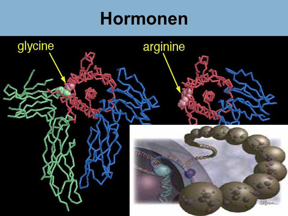Dr Peet H Botha46 Hormonen
