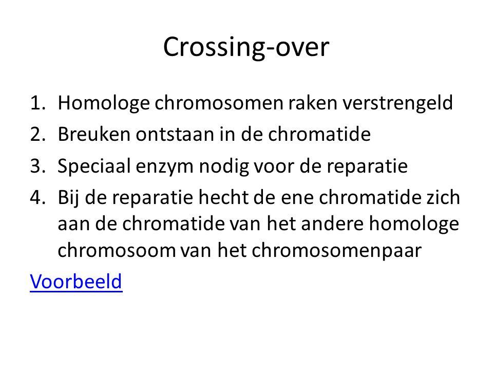 Crossing-over 1.Homologe chromosomen raken verstrengeld 2.Breuken ontstaan in de chromatide 3.Speciaal enzym nodig voor de reparatie 4.Bij de reparati