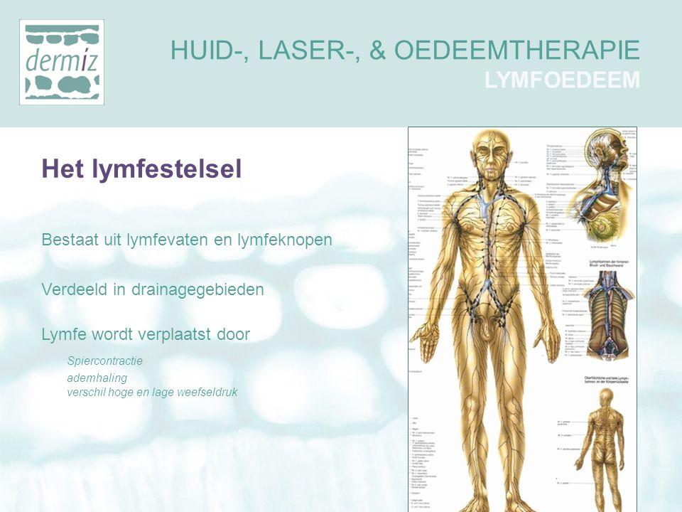 Het lymfestelsel Bestaat uit lymfevaten en lymfeknopen Verdeeld in drainagegebieden Lymfe wordt verplaatst door Spiercontractie ademhaling verschil ho