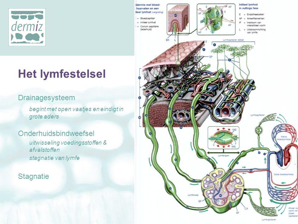 Het lymfestelsel Drainagesysteem begint met open vaatjes en eindigt in grote aders Onderhuidsbindweefsel uitwisseling voedingsstoffen & afvalstoffen s