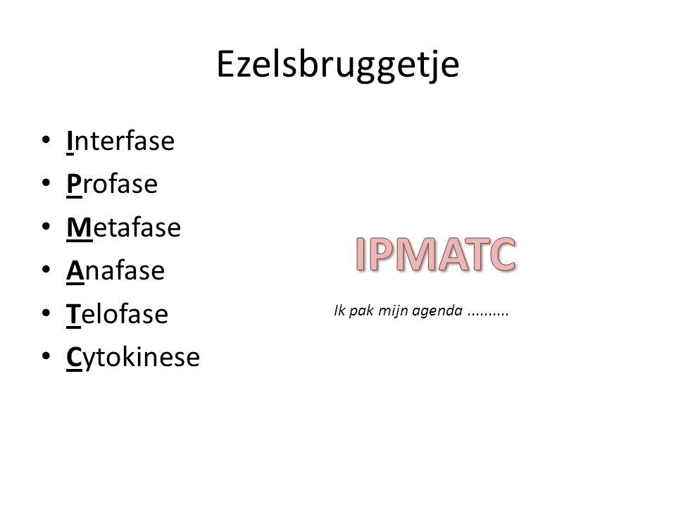 Ezelsbruggetje • Interfase • Profase • Metafase • Anafase • Telofase • Cytokinese Ik pak mijn agenda..........