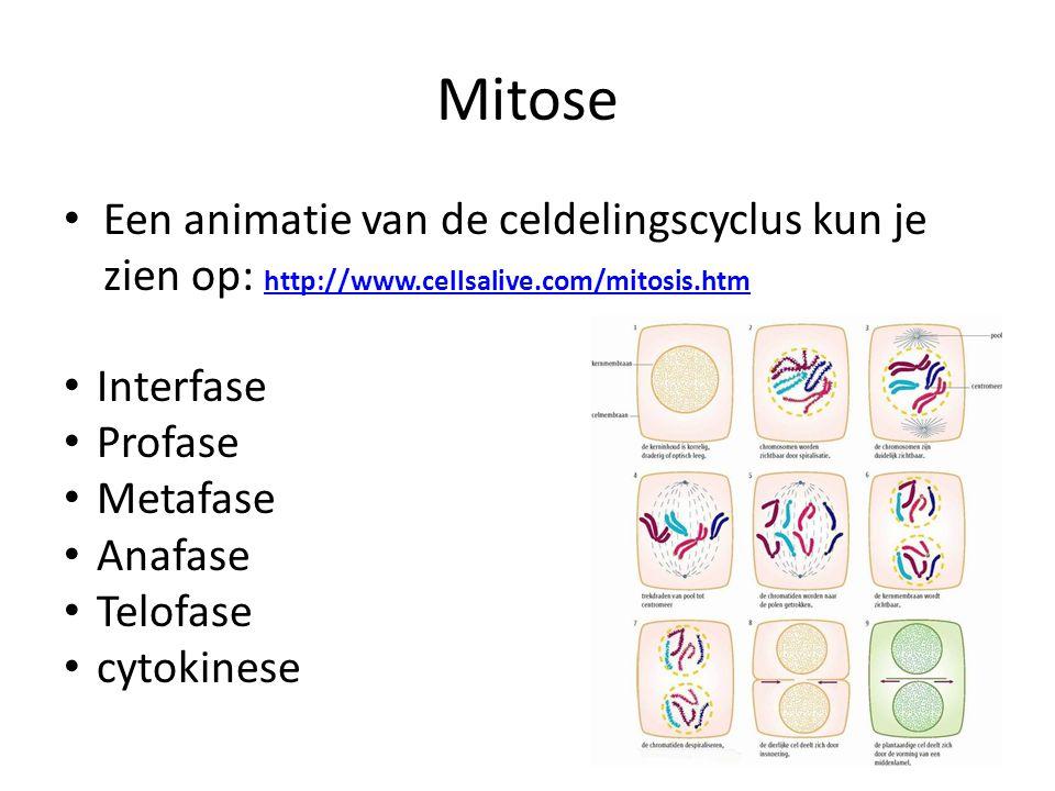 Mitose • Een animatie van de celdelingscyclus kun je zien op: http://www.cellsalive.com/mitosis.htm http://www.cellsalive.com/mitosis.htm • Interfase
