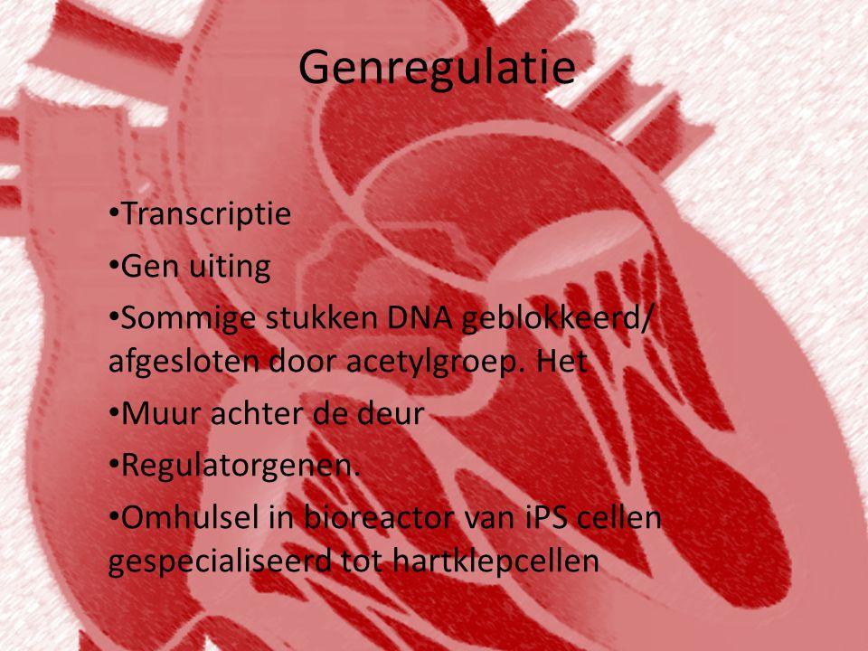 Genregulatie • Transcriptie • Gen uiting • Sommige stukken DNA geblokkeerd/ afgesloten door acetylgroep. Het • Muur achter de deur • Regulatorgenen. •