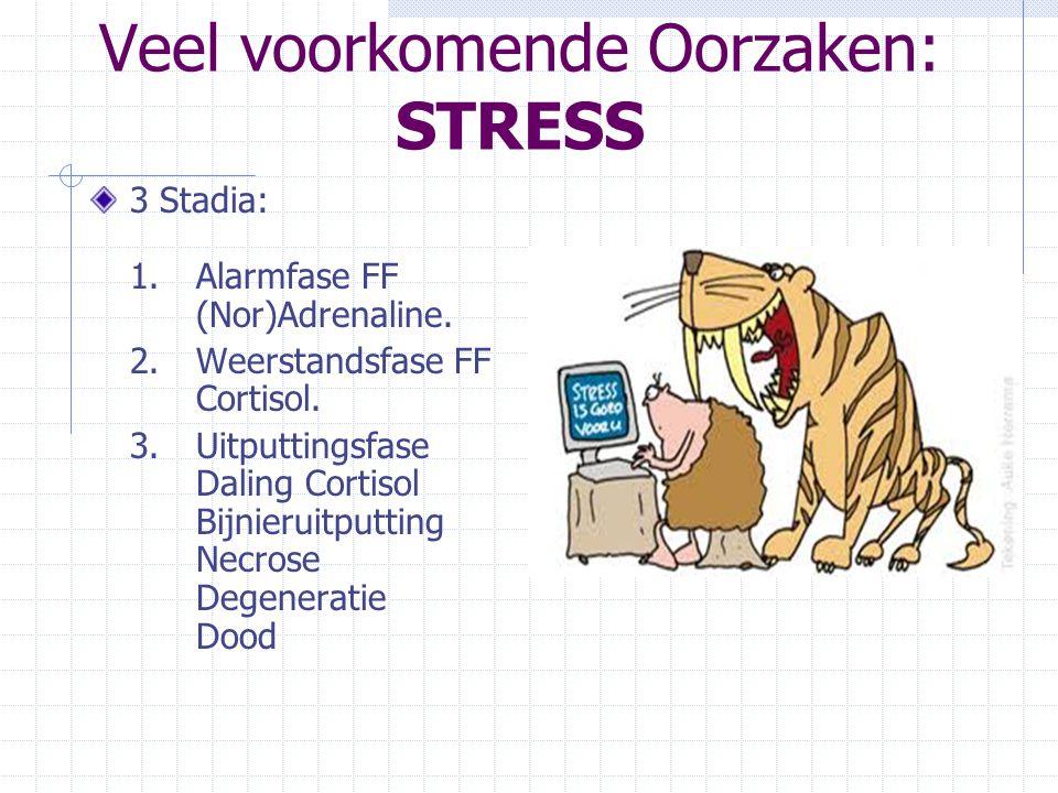Veel voorkomende Oorzaken: STRESS 3 Stadia: 1.Alarmfase FF (Nor)Adrenaline. 2.Weerstandsfase FF Cortisol. 3.Uitputtingsfase Daling Cortisol Bijnieruit