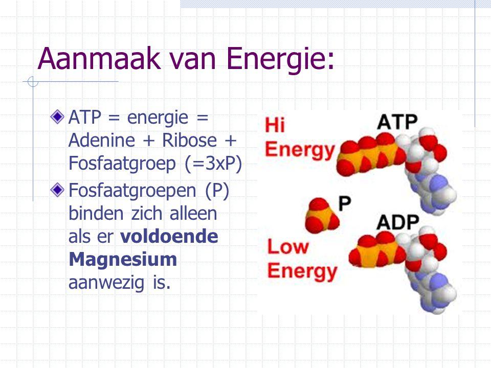 Aanmaak van Energie: ATP = energie = Adenine + Ribose + Fosfaatgroep (=3xP) Fosfaatgroepen (P) binden zich alleen als er voldoende Magnesium aanwezig