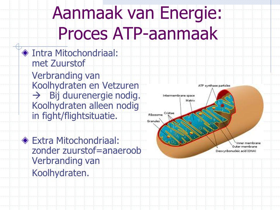 Aanmaak van Energie: Proces ATP-aanmaak Intra Mitochondriaal: met Zuurstof Verbranding van Koolhydraten en Vetzuren  Bij duurenergie nodig. Koolhydra