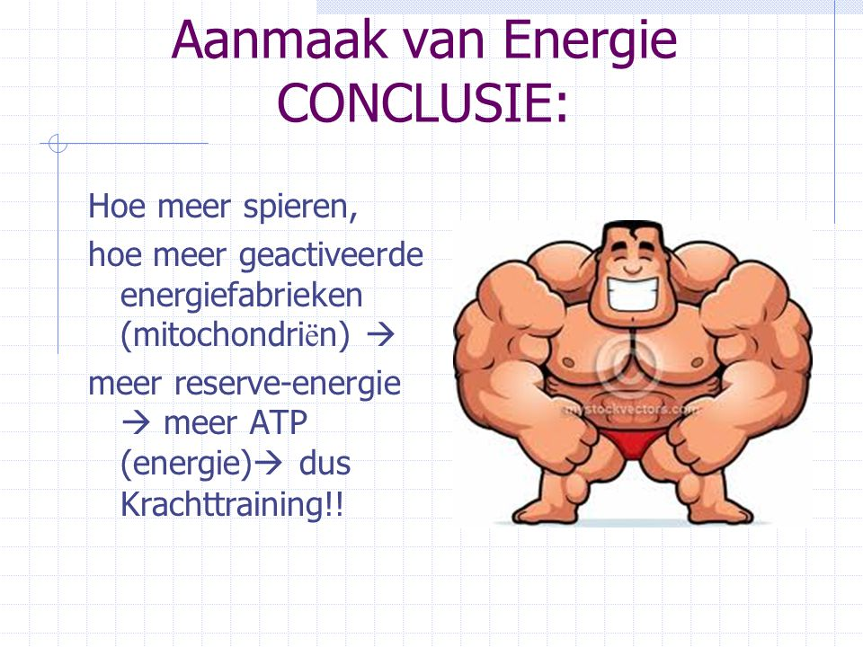 Aanmaak van Energie CONCLUSIE: Hoe meer spieren, hoe meer geactiveerde energiefabrieken (mitochondri ë n)  meer reserve-energie  meer ATP (energie)